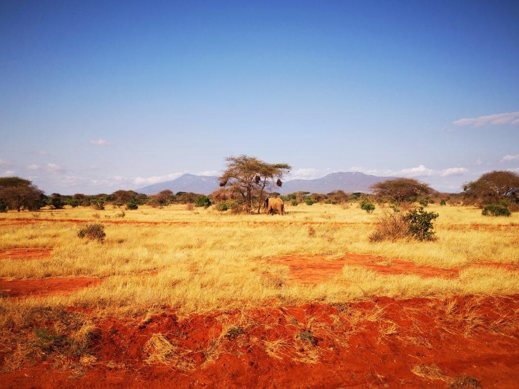 View of Tsavo East National Park with elephant on the Kenya safari tour